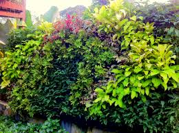 tips for setting up your first highrise vertical garden