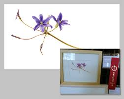 san diego native plant society call for entries for artwork for the 2015 california native plant