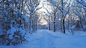 winter nature wallpapers trees winter landscape snow nature wallpapers hd 1080p for hd 16