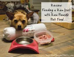 review feeding a raw diet with raw paws pet food the chesnut mutts