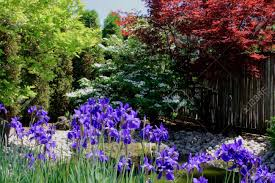 Japanese Style Garden by Still Picture Of Colourful Arranged Corner Of Japanese Style