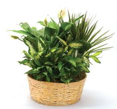 Plant Delivery Plant Delivery Columbus Ohio Same Day Plant Delivery Orchids U0026 Ivy