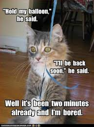 Cat Soon Meme - two minutes is too long i can has cheezburger funny cats cat