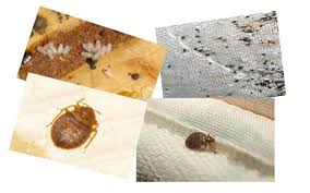 bed bugs uv light killing how to get rid of bed bugs fast and for good simple steps and