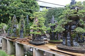a visit to omiya bonsai village u2013 valavanis bonsai blog