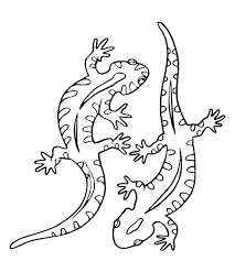 gecko coloring pages more from my site storks coloring pages