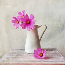 Life Of A Flower - still life u0026 pink flowers