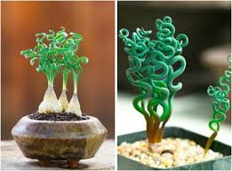 best 25 exotic house plants ideas on pinterest indoor flowering