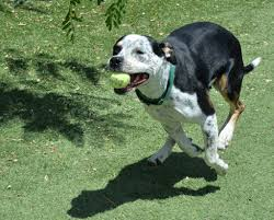 help my dog is obsessed with playing fetch rover com