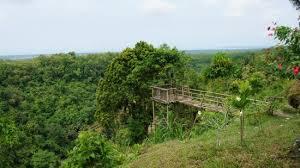 jojogan wonderhill a view place green trees waterfall