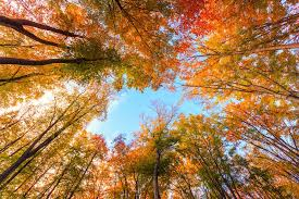 why do leaves change color in autumn mnn nature network