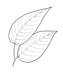 fall leaf pattern printables fall leaves leaves and patterns
