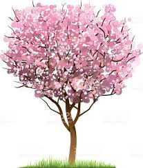 japanese cherry blossom tree cherry blossom tree wall decal