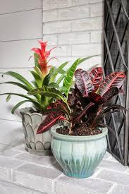 Indoor Plants Arrangement Ideas by Best 20 Indoor Tropical Plants Ideas On Pinterest Tropical
