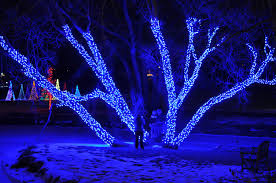 hudson gardens christmas lights beautiful tree lit up with christmas lights at hudson gardens in