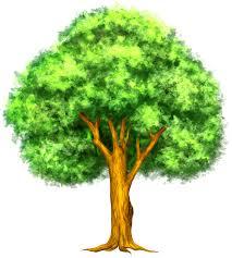 clip art tree outline free clipart images 2 clipartandscrap