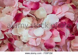 Real Rose Petals Red Rose Petals Background Real Roses Petals Backdrop Floral