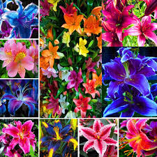 online buy wholesale lily bloom from china lily bloom wholesalers