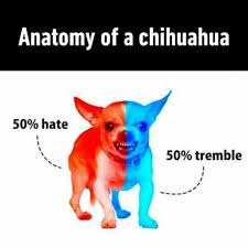 Funny Chihuahua Memes - anatomy of a chihuahua funny pictures quotes memes funny images