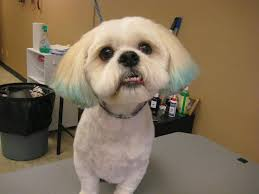 Pet Photo Albums Don U0027t Shave Your Double Coated Dog Facebook