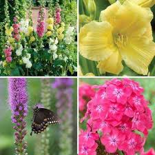 assorted mix spring to summer flower bulbs garden plants