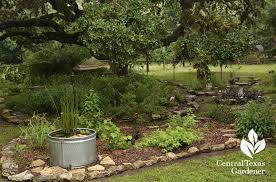 Backyard Bird Sanctuary by Wild About Flowers And Habitat Central Texas Gardener