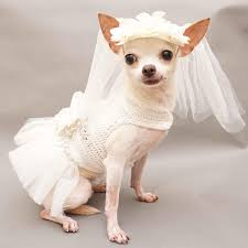 dog wedding dress white bridal dog wedding dress fancy dog bridesmaid dress