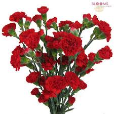 carnations in bulk wholesale filler flowers bulk pack blooms by the box