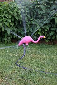 25 unique plastic flamingos ideas on yard flamingos