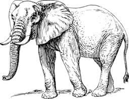walking elephant drawing clip art at clker com vector clip art