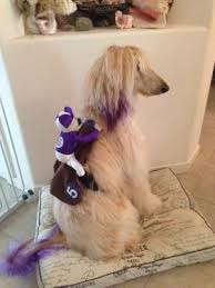 afghan hounds for adoption northern ca afghan hound rescue home