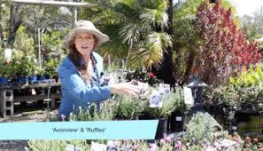 Organic Vegetable Gardening Annette Mcfarlane by Lavender In The Subtropics Claire Bickle