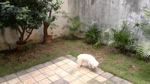 our backyard makeover before and after gringation cancun