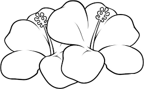 hawaiian flower coloring pages flower coloring pages of
