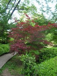 botanical gardens of rome u2013 japanese garden japanese gardening