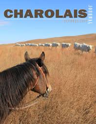 charolais journal by edje issuu
