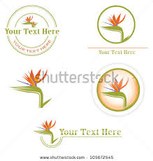 different designs orange bird paradise flower stock vector