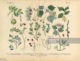 ornamental trees shrubs and plants botanical