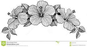 three hibiscus flower bouquet stock vector image 52675102