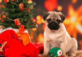 christmas dogs wallpapers high quality download free