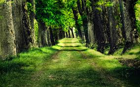 path through the woods wallpaper ibackgroundwallpaper