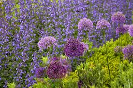 Flowers That Keep Mosquitoes Away Healthy Sustainable Living 12 Best And Pretty Companion