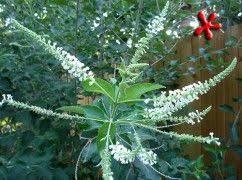 Tropical Fragrant Plants - 15 best fragrance garden images on pinterest flower gardening