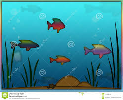 rainbow fish aquarium background royalty free stock photos image