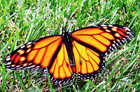 8 butterfly vs caterpillar bible science