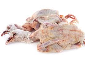 cuisiner les pigeons tout sur le pigeon le cuisiner le conserver