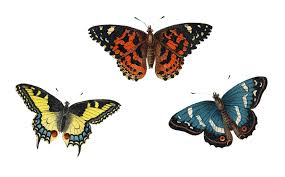 besottment by paper relics free download butterflies caterpillars