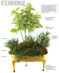 make a countertop kitchen bonsai herb garden