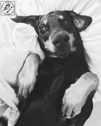 Katze Schlafzimmer Ja Bett Nein Hunde Im Bett