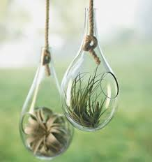 terrarium pictures and ideas